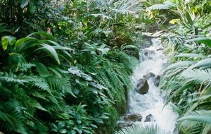 The Casual Gardener: Gardens of distinction