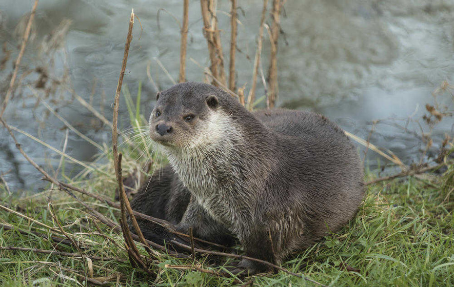 Take on Nature: Otter is 'the noblest little soul'