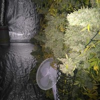 Cannabis factory uncovered by police in Newry bungalow