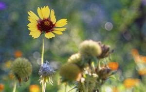 Casual Gardener: Resolve to do better in 2016