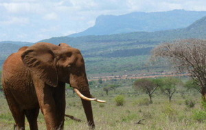 Kenya's great for a beach break as well as for safaris