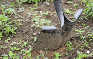 The Casual Gardner: Dig your way to success