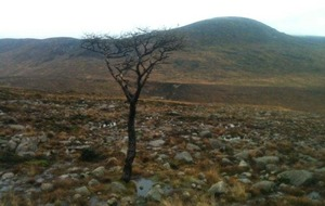 Take on Nature: Imagining Beckett in the Mournes
