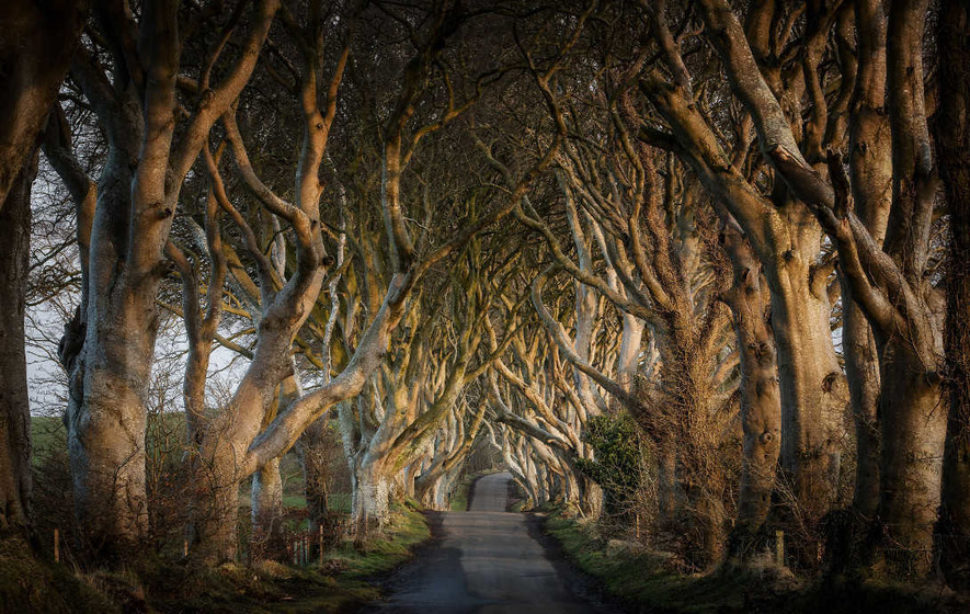 Dark Hedges trees felled by Storm Gertrude