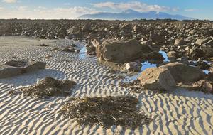 Woman's body found on Co Down beach