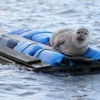 Take on Nature: Is it any wonder seals are wary of us?