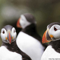 Out and About: Visitors set to flock to Rathlin Island as bird centre reopens