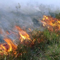 Out and About: Be vigilant for fire bugs over Easter