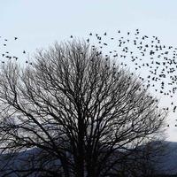 RSPB garden survey: Warmer winter boosts smaller birds