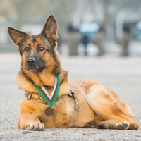 Hero dog who lost leg in Afghanistan awarded highest war medals for animals