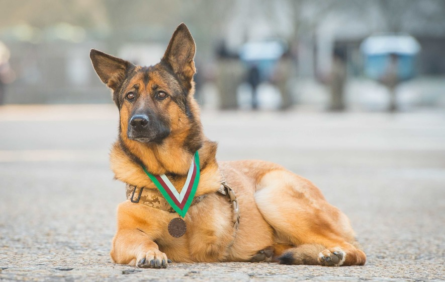Jobs Of Service Dogs