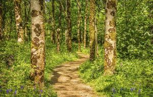 Take on Nature: Imagine Ireland without ash