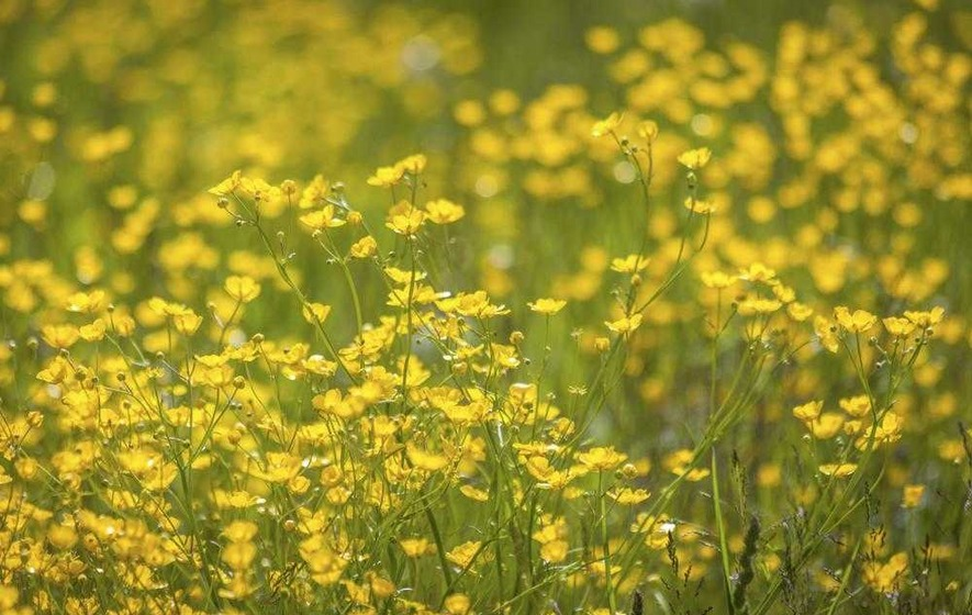 Outdoors: Boost wildflower numbers with Magnificent Meadows