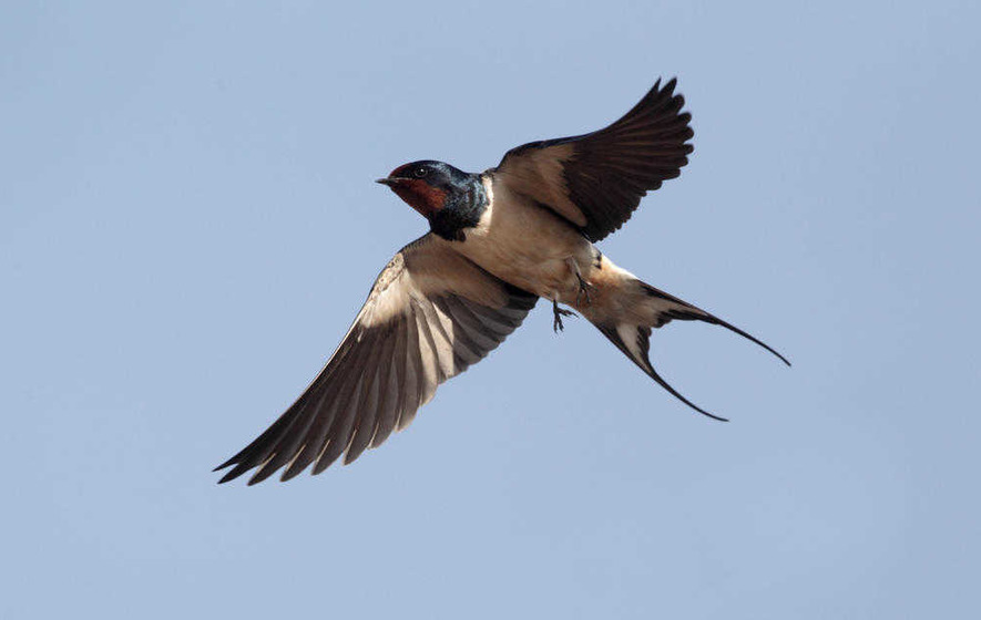Take On Nature: 'I meditate upon a swallow's flight'