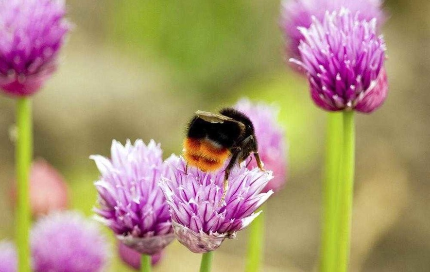 TV presenter Michaela Strachan's bee plea