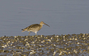 Take on Nature: Mary Colwell responds to curlew's cry for help