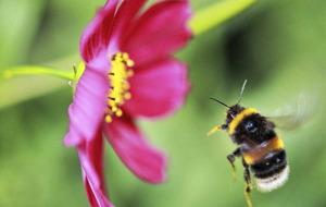 The Casual Gardener: Creating a buzz in the garden