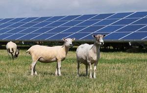 Antrim solar farm will provide a quarter of Belfast International Airport's energy