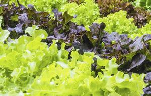The Casual Gardener: Veg patch colour splash