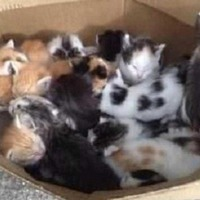 Seventeen kittens abandoned outside Donegal butcher's shop