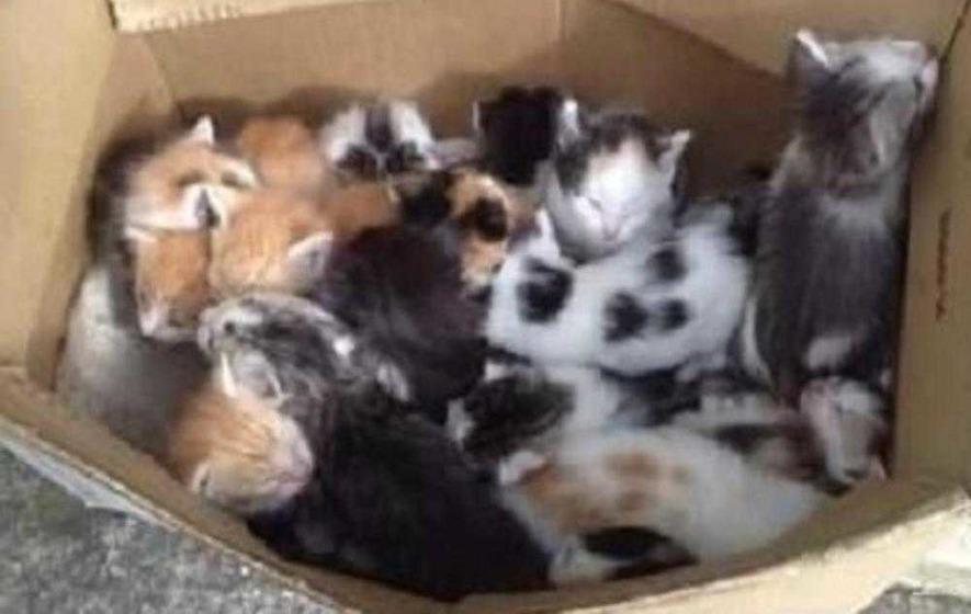 Seventeen kittens abandoned outside Donegal butcher's shop