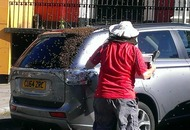 Town abuzz after bees descend on car