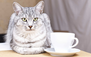 Belfast's first cat cafe is on the cards with Kickstarter