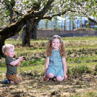 Outlook 'promising' for Armagh apple growers