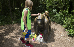 Gorilla shot dead after grabbing boy (4) who fell into zoo exhibit
