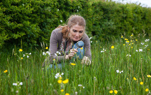 Roadside verge wildflower initiative looks set to grow