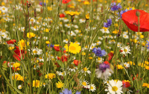 The Casual Gardener: Wildflowers are so much more lovely than putting greens