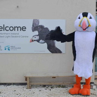 Rathlin Island 'puffin' mascot needs a name