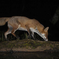Take on Nature: Patience and poo needed for fox encounters