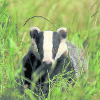 Project to control bovine TB enters third year