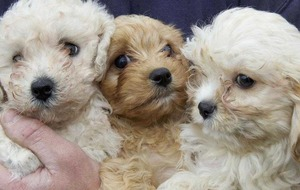 Puppies seized at Cairnryan port over 'illegal dog breeding'