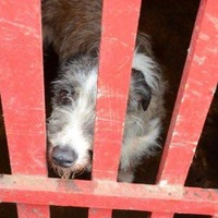 Neglected goat, ferrets and dogs rescued from cannabis factory