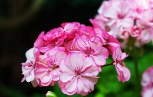 Gardening: Tips on what to do in the week ahead
