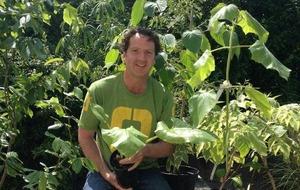 The Casual Gardener: Carlow's floral fiesta