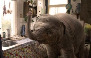 'Elephant angel' movie to start filming in Belfast