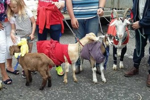 Well dressed goats & 'dung spitting' fun at Lady of the Lake Festival