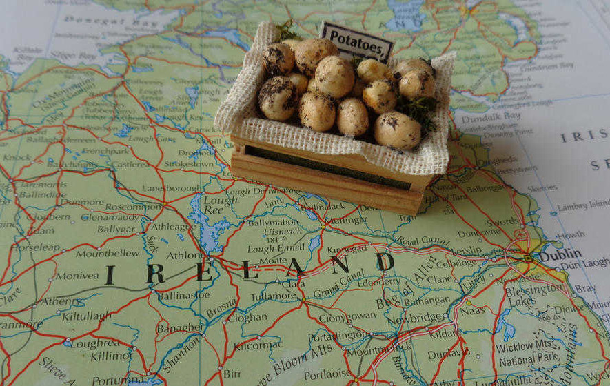 The Casual Gardener: Don't let your spuds be blighted