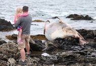 Minke whale washes up on the Co Down shore