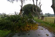 Iconic tree falls at Dark Hedges in Co Antrim