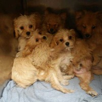 14 puppies worth €17,000 seized by Gardaí at Dublin port