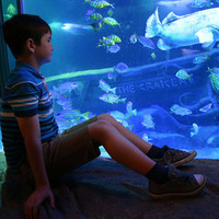 Video: Exploris Aquarium in Portaferry to reopen