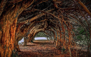 Take on Nature: Look behind yew