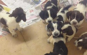 Ten pups rescued after being dumped in Co Down garden