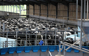 Brexit 'could provide opportunity' for Northern Ireland dairy sector