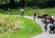 Deer collides with cyclist during Dublin city triathlon