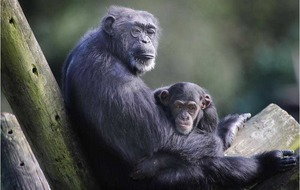 Animals still fascinate Julie Mansell after 32 years at zoo